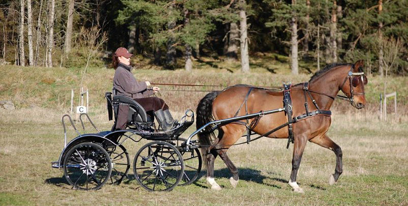 Horse Drawn Marathon, Competition and Pleasure driving Carriages.