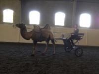 tr20_camel