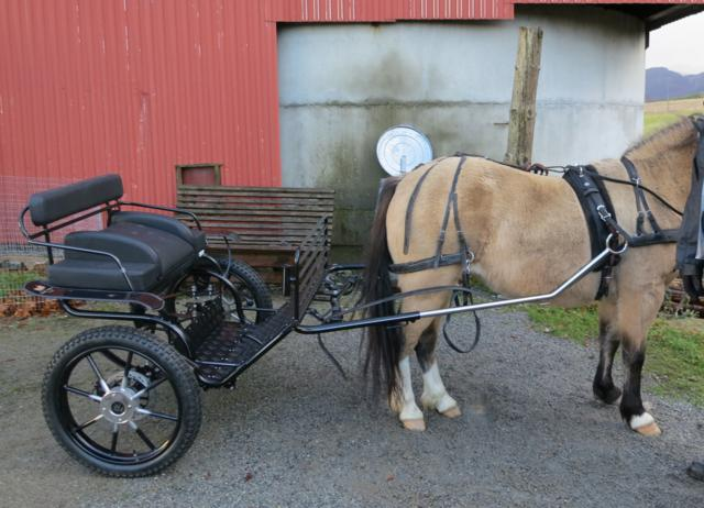 Cruiser Pony (MXP) 10.2-12.3hh. From £1623